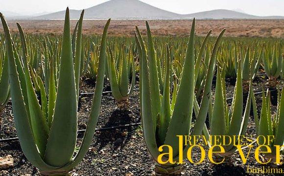 Natural Remedies of aloe vera