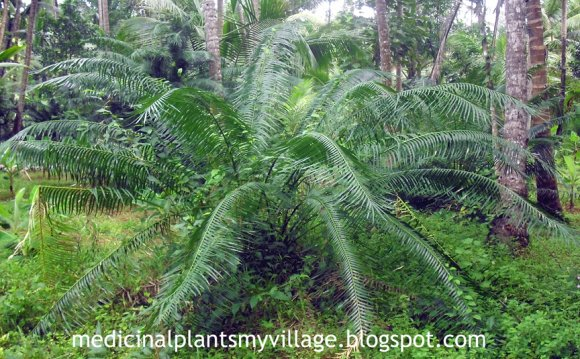 Medicinal Plants and Their